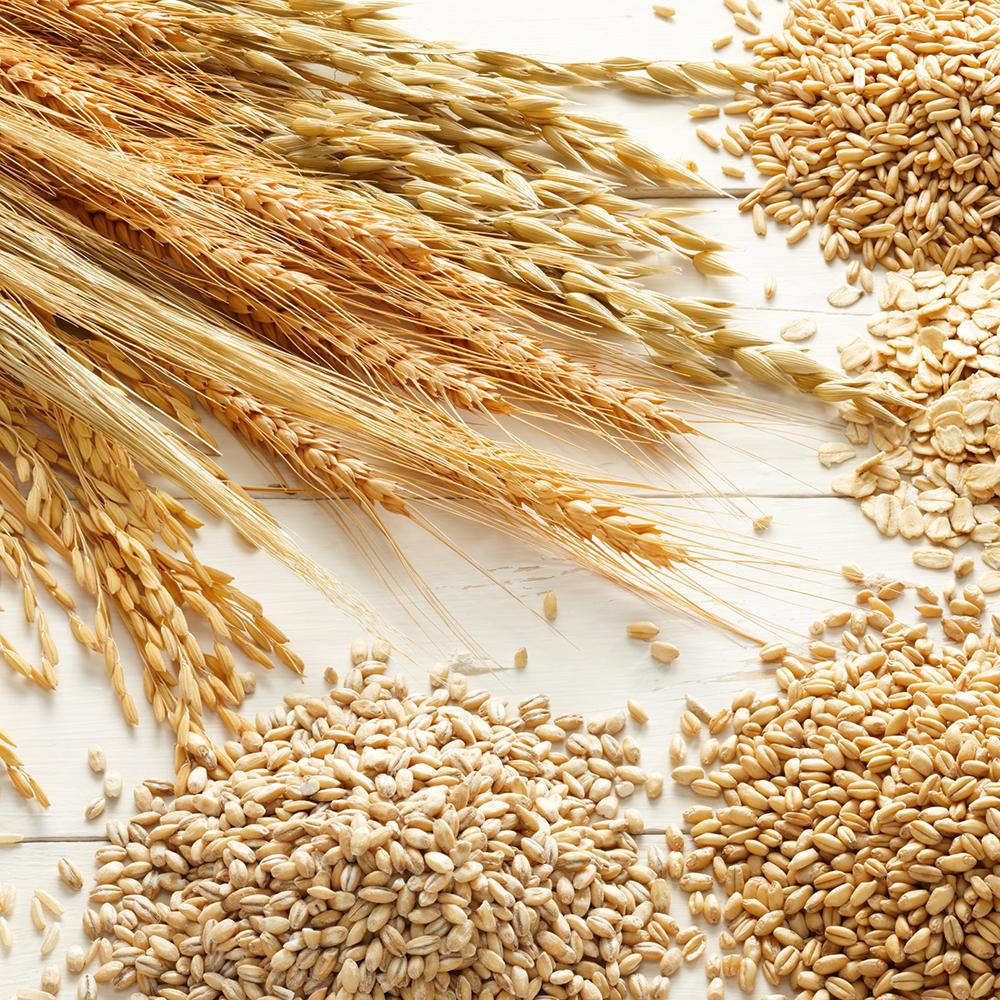 碳水化合物 & 纤维 Carbohydrate & Fibre